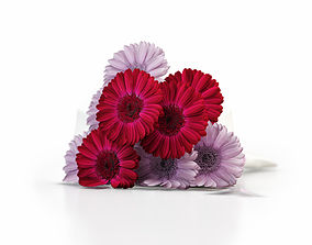 Bouquet of Gerbera 3D model