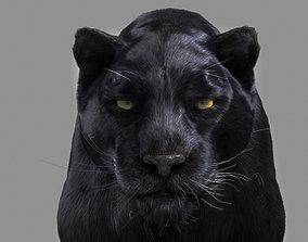 Panther black 3D