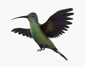 Hummingbird Animated 3D asset
