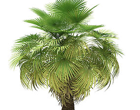 California Palm Tree 3D Model 5m