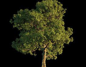 3D OAK TREE 1