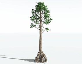 EVERYPlant Common Cordaites SINGLE --1 Model-- 3D