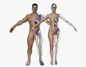 Male and Female Full Body Anatomy 3D