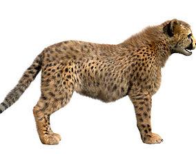 Cheetah-Baby 3D cheetahbaby