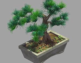 Bonsai - Flowerpot 36 3D