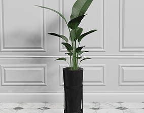 3D model Potted Plant Birds Of Paradise