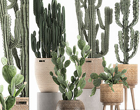 Decorative cactus in baskets for the interior 617 3D