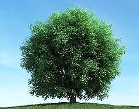 3D model Very Leafy Green Tree