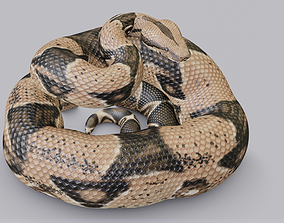 Rigged Boa Constrictor 3D asset
