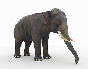 elephant Elephant 3D model