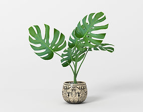 3D model plant Monstera potted home flower