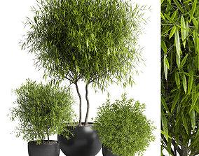 3D asset Outdoor plant 11