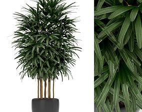 Plants collection 171 3D