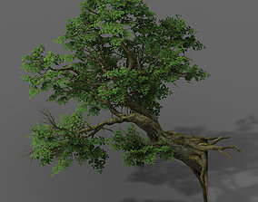 Plant - banyan tree 05 3D