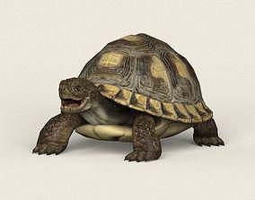 Game Ready Tortoise 3D asset