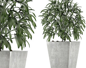3D model Single Plant 05