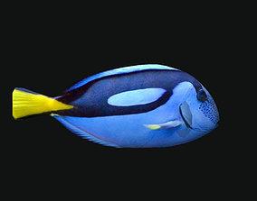 3D asset PARACANTHURUS EPATUS Fish