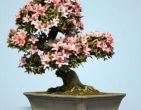 3D asset Satsuki Bonsai Tree Blossom 12