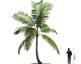 Exotic Cocos Nucifera Tree 3D