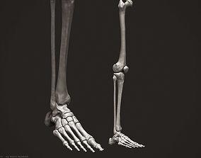 3D Human Leg Bones