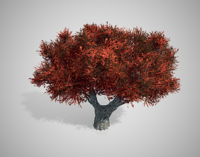 African Olive Red Tree 3D asset