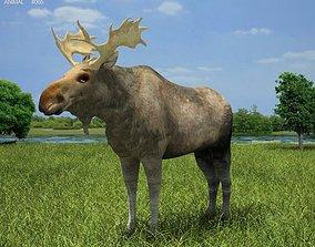 Moose Alces Alces 3D model