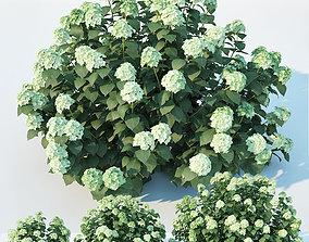 3D model Hydrangea arborescens Nr1 Three sizes