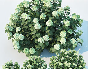3D model Hydrangea arborescens Nr1 Three sizes