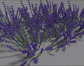 3D model park Lavender