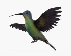 3D model Hummingbird Rigged
