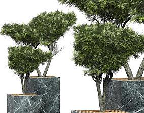 Flower Pack 151 3D model
