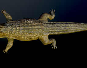 Crocodile Alligator Cayman Reptilian Vertebrata 3D model
