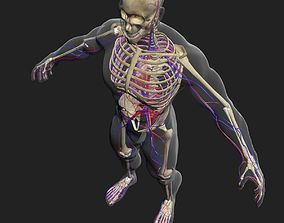 zbrush Circulatory System with Skeleton 3DSmax