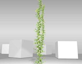 3D asset Ivy Vine - Version 3