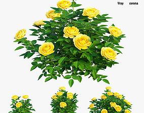 Golden celebration rose 3D model