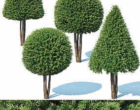Taxus Baccata Nr6 - topiary set model 2 park