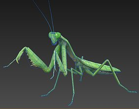 mantis insect 3D asset low-poly