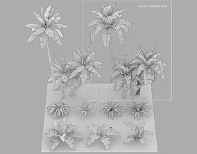 Cartoon Oasis Plants 3D