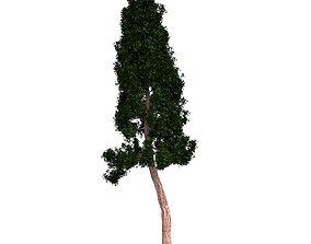 3D model earth Redwood