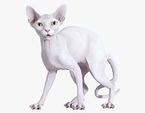 3D Sphynx Cat White Standing Pose poly