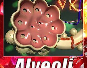 Alveoli Anatomy 3D model