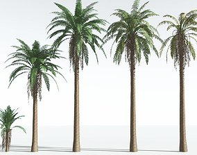 EVERYPlant Date Palm EXT --24 Models--