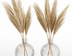 Big dried flower pampas grass in glass vase 6 3D