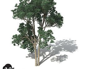 XfrogPlants Jarrah 3D