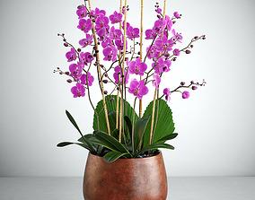 Orchid 7 3D model