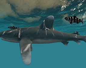 Oceanic White tip Shark 3D model