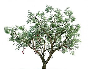 3D Shadowed Leaf Tree With Little Fruits