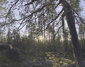 Nature HDRI - Forest Glade 3D