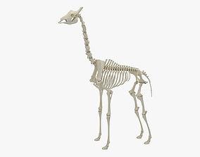 Giraffe Skeleton 3D model