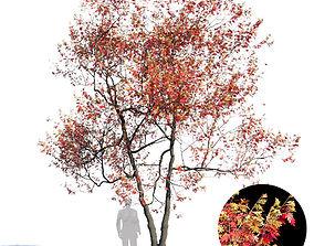 White Oak Var6 3D